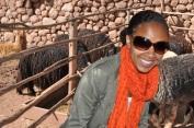 At a Llama and Alpaca Farm