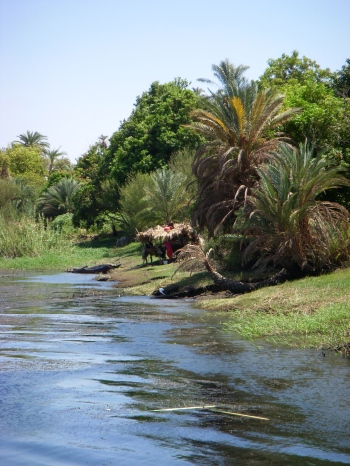 Nile Vegetation